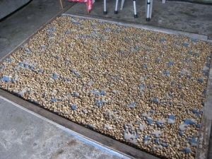 Dried peanuts from Paiwan\\\'s Tuban Village