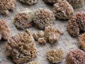 Tsou\\\'s sun-dried grass jelly
