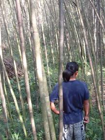 鄒族-自然資源-竹子 攝影:陳威廷
