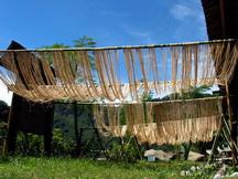 織布材料準備-苧麻處理